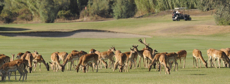 Golf-9-1500×550-5a266832037b6